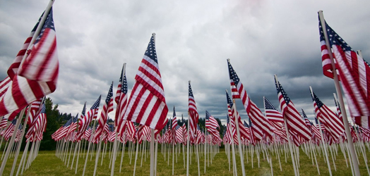 small American flags wave in open field